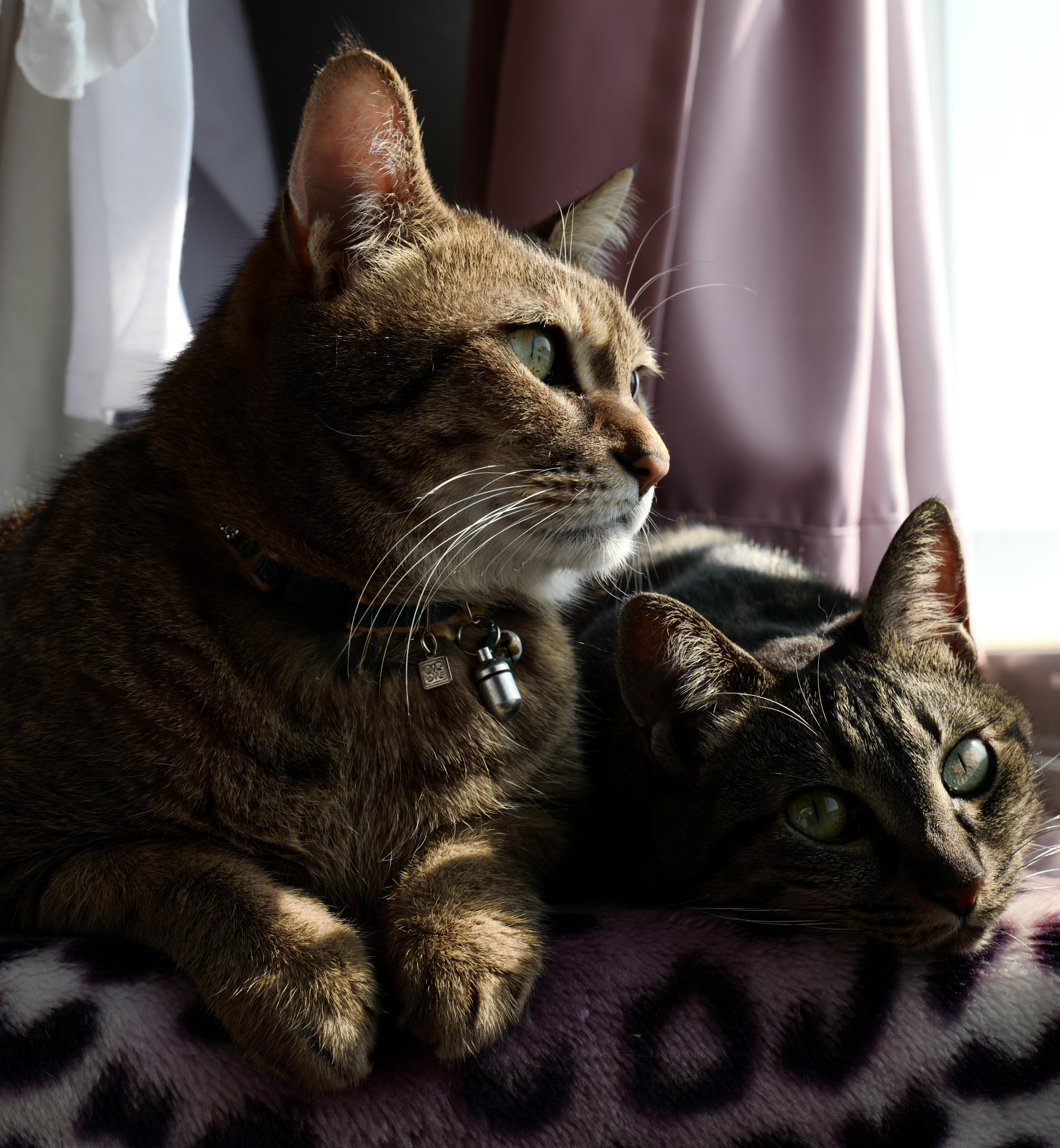 プラネットスキップ 猫 ペットシッター